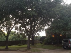 Tree Pruning Cover Photo