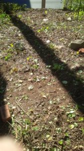 Clear Yard Of Rocks And Lay Loam Cover Photo