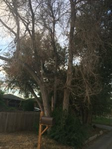 Front Tree Removal Cover Photo