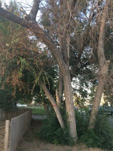 Fallen Tree Removal Cost