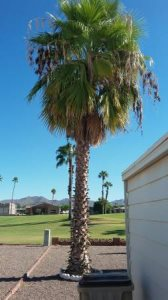 Trim Palm Tree Cover Photo