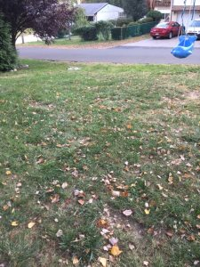 Fall Lawn Clean-Up Cover Photo