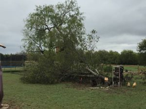 Need Tree And Stump Removed Cover Photo
