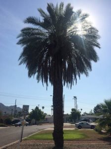 Palm Tree Needs Trim Cover Photo