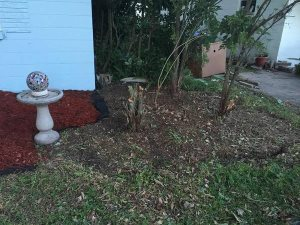 Need Shrub Stumps Removed Cover Photo