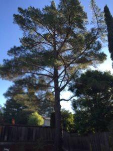 Remove Tree Cover Photo