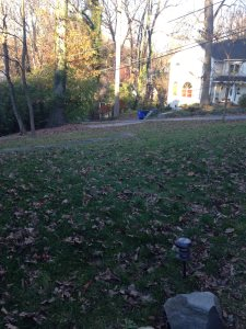 Leaf Blowing Cover Photo