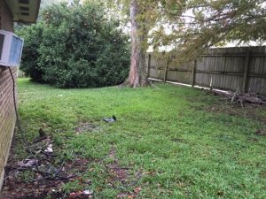 Backyard Makeover  Cover Photo