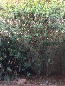 Gardener, Tree Trimmer Cover Photo