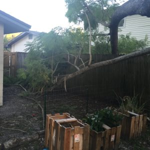 Branch Removal Cover Photo