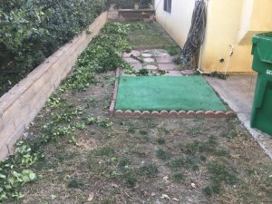 Artificial Grass Cover Photo
