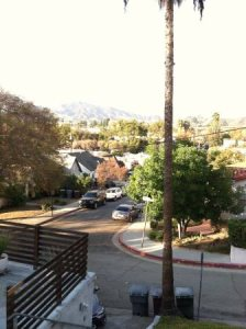 Need Mexican Fan Palm Tree Removed South Glendale Cover Photo