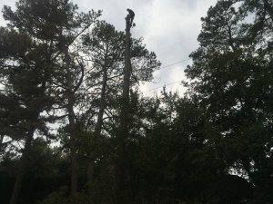 Need A Tree Climber Cover Photo