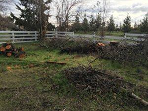 Tree Limb Removal Cost