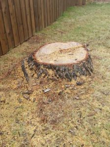 Need Stump Removed Asap Cover Photo