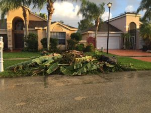 Vegetation Debris Removal Wanted to Haul Away Cover Photo