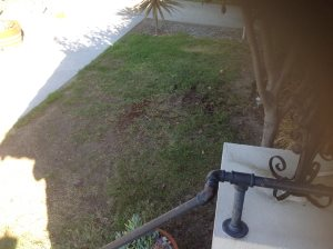 Pull Weeds, Aerate Lawn Cover Photo