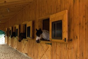 Horse Farm Cover Photo