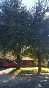 Tree Cutting And Removal Cover Photo