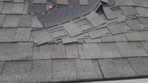 Roof & Trim Repair Cover Photo