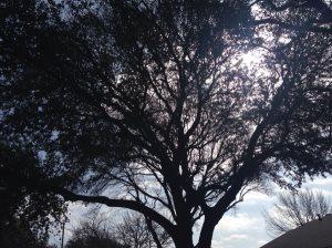 Tree Trim Cover Photo