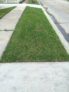 Renew Grass Cover Photo
