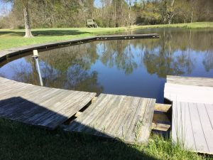 Walkway Around Pond Cover Photo