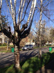 Tree Costs