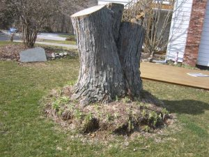 Stump Removal Cover Photo