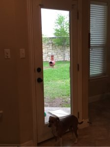Dog Door Cover Photo