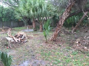 Removed Yard Waste Cover Photo
