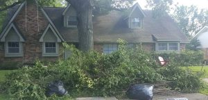 Tree Branch Removal Cover Photo
