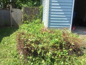Cut And Remove Shrubs Cover Photo