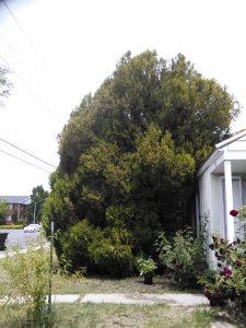 Tree Cutting Estimates
