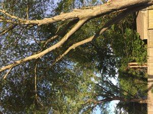 Nesting Swing Installation Estamite  Cover Photo
