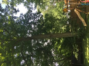 Tree Cover Photo
