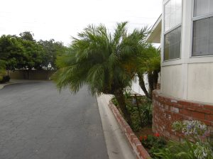 Palm Tree Cover Photo