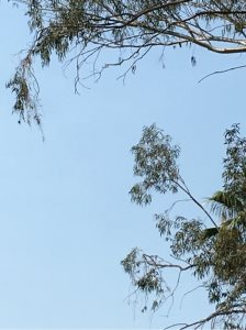 Trim Two Branches In View Cover Photo