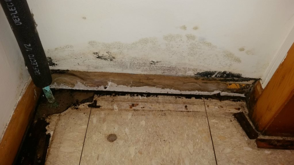 How To Detect Mold in House