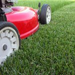 Lawn Care And Maintenance