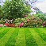 Limitless Lawns by Belinda Haney Logo