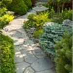 How To Landscape Backyard