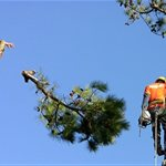 Tree Cutting Company