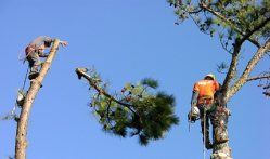 Tree Surgeon Logo