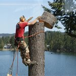 Tree Trunk Removal