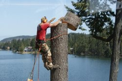 High Climbers Tree Service Logo