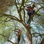 Certified Recovery Specialist Tree Service Cover Photo