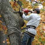 F Flores Tree Service Cover Photo