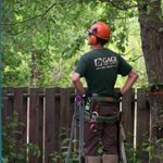 Tamarack Tree Service Cover Photo