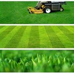 A cut Above Lawn Care Logo